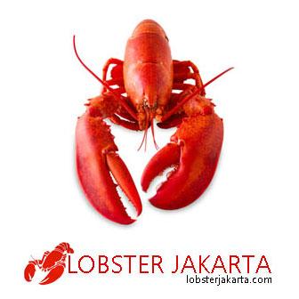 lobster-jakarta